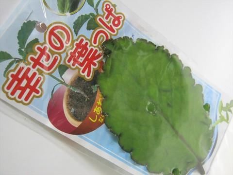 2014-07-31_leaf_01.JPG