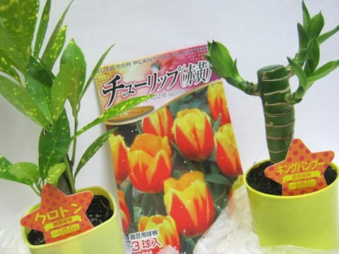 2014-10-26_Plants_01.JPG