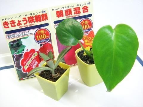 2015-05-06_Plants_01.JPG