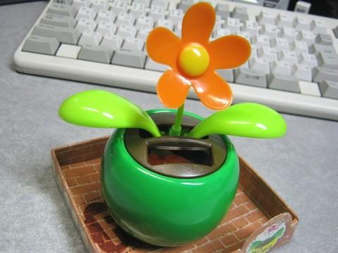 2012-12-17_YuRax2_Flower_17.JPG