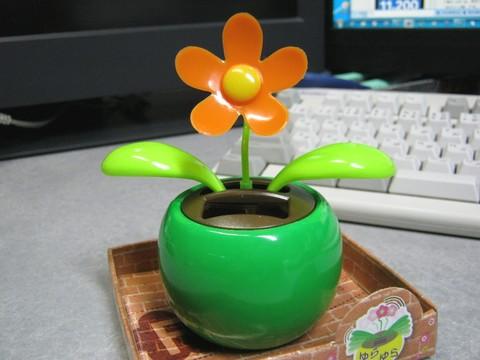 2012-12-17_YuRax2_Flower_20.JPG