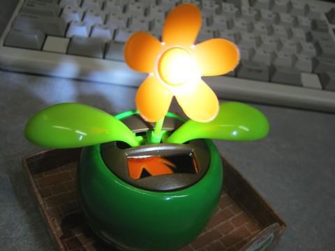 2012-12-17_YuRax2_Flower_22.JPG