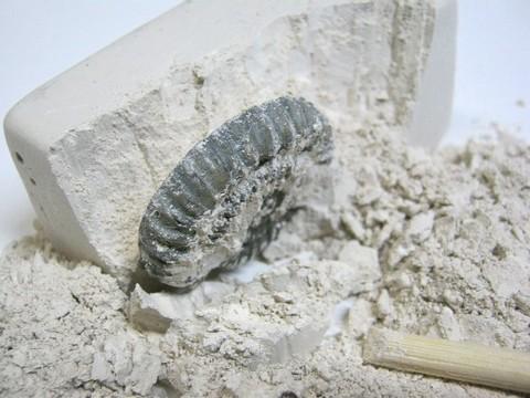 2013-08-05_Fossil_Museum_22.JPG