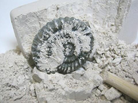 2013-08-05_Fossil_Museum_24.JPG