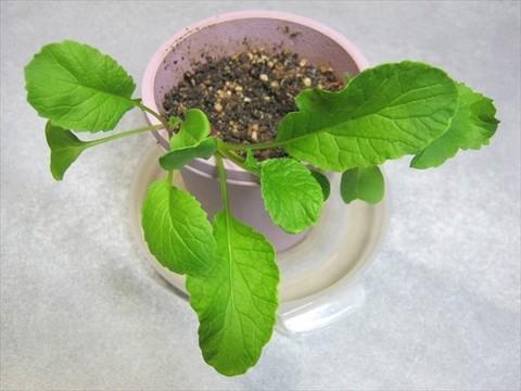 2013-12-06_Cultivation-kit_64.JPG