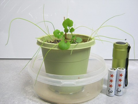 2013-12-30_Cultivation-kit_87.JPG