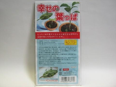 2014-07-31_leaf_03.JPG