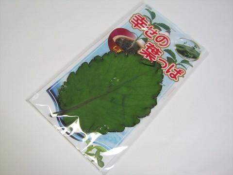 2014-07-31_leaf_05.JPG