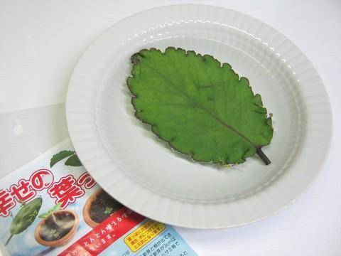 2014-07-31_leaf_23.JPG