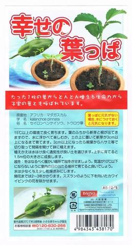 2014-07-31_leaf_30.jpg