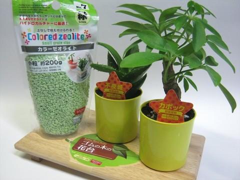 2014-09-20_Plants_01.JPG