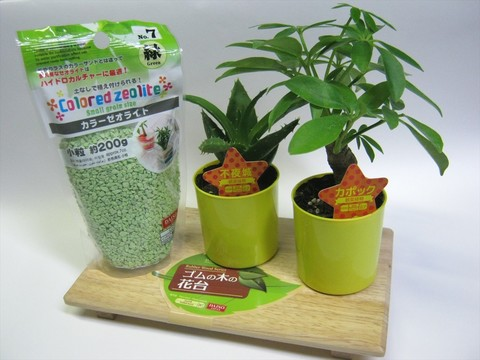 2014-09-20_Plants_02.JPG