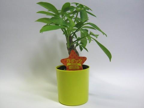 2014-09-20_Plants_12.JPG