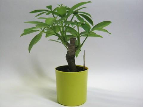 2014-09-20_Plants_13.JPG