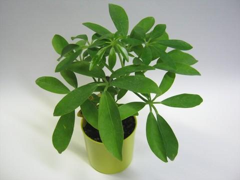 2014-09-20_Plants_14.JPG