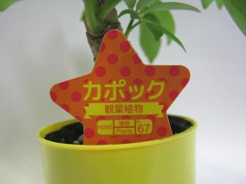 2014-09-20_Plants_17.JPG