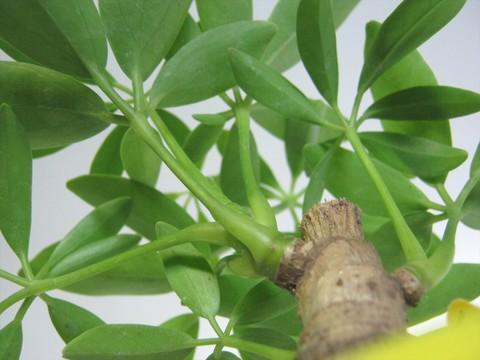 2014-09-20_Plants_21.JPG