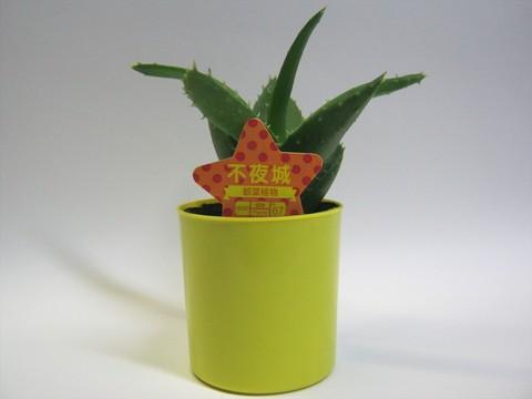 2014-09-20_Plants_27.JPG