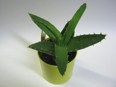 2014-09-20_Plants_30.JPG
