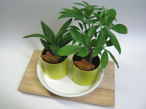 2014-09-20_Plants_47.JPG