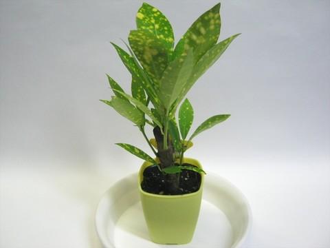 2014-10-26_Plants_03.JPG