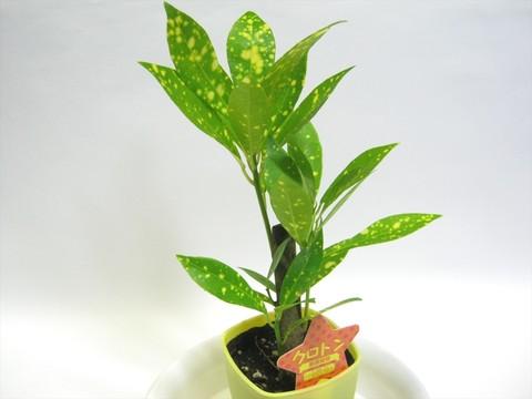2014-10-26_Plants_04.JPG