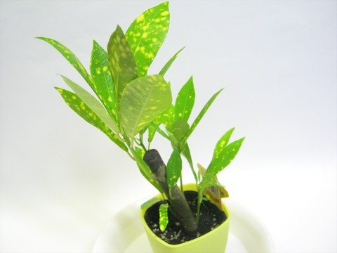 2014-10-26_Plants_05.JPG