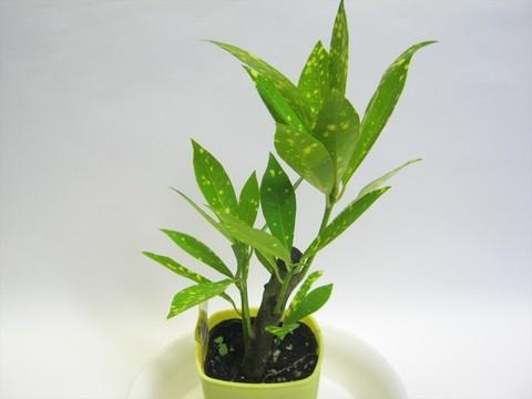 2014-10-26_Plants_06.JPG