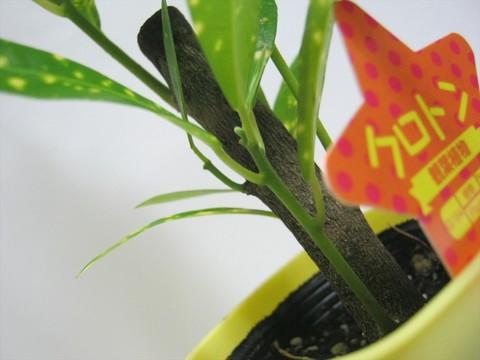 2014-10-26_Plants_11.JPG