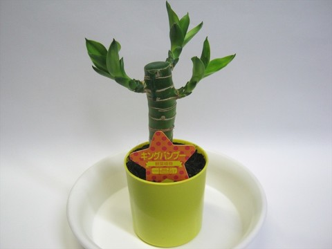 2014-10-26_Plants_19.JPG