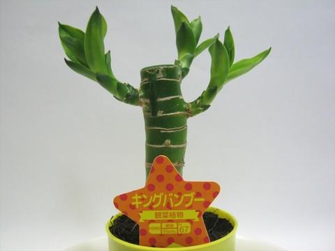 2014-10-26_Plants_20.JPG