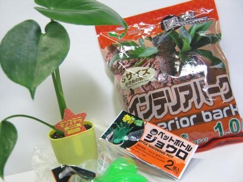 2014-11-08_Plants_01.JPG