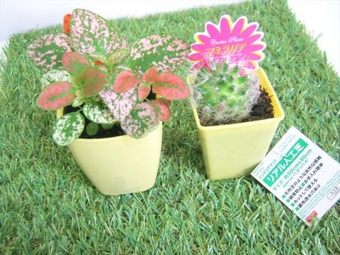 2015-04-02_Plants_01.JPG