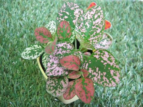 2015-04-02_Plants_03.JPG