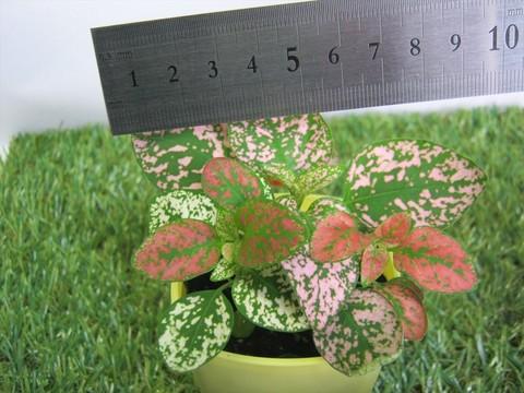 2015-04-02_Plants_04.JPG