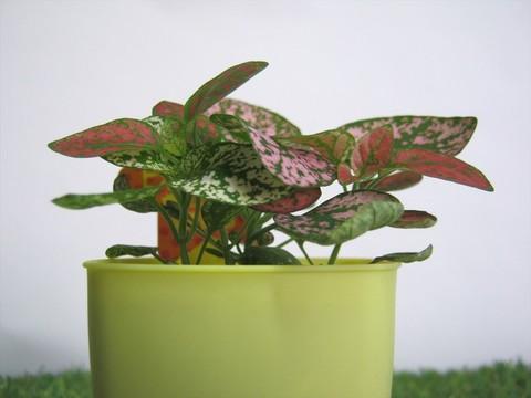 2015-04-02_Plants_06.JPG