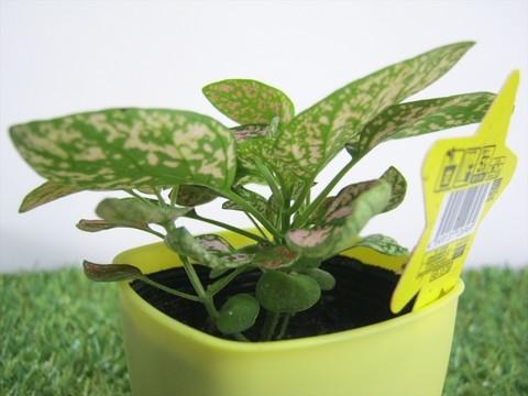 2015-04-02_Plants_08.JPG