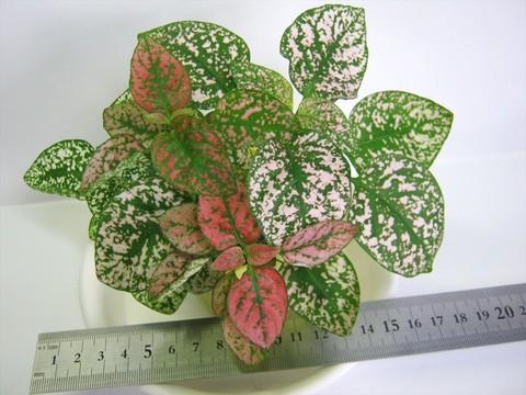 2015-05-05_Plants_33.JPG