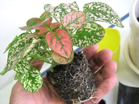 2015-05-05_Plants_44.JPG