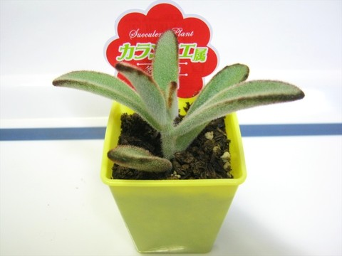 2015-05-06_Plants_14.JPG