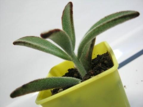2015-05-06_Plants_23.JPG