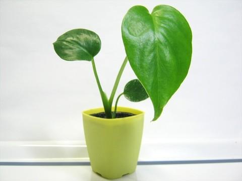 2015-05-06_Plants_27.JPG