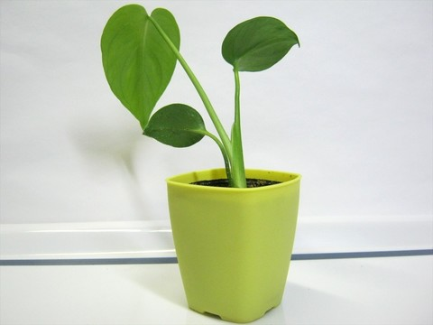 2015-05-06_Plants_29.JPG