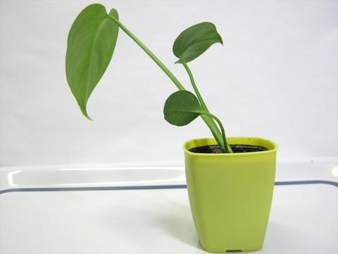 2015-05-06_Plants_30.JPG