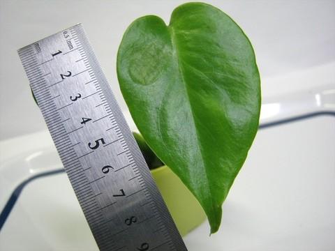 2015-05-06_Plants_37.JPG