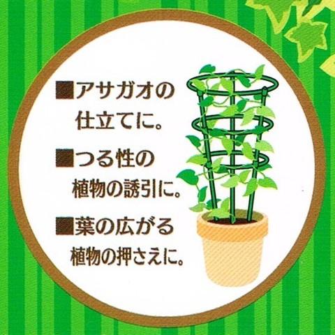 2015-06-03_Plants_39.jpg